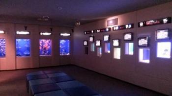 浅虫水族館展示室20131126.jpg