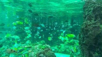 熱帯海域水槽20131117.jpg