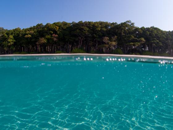 アンダマン諸島の楽園.jpg