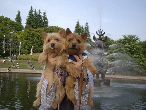 世田谷公園へお散歩.jpg