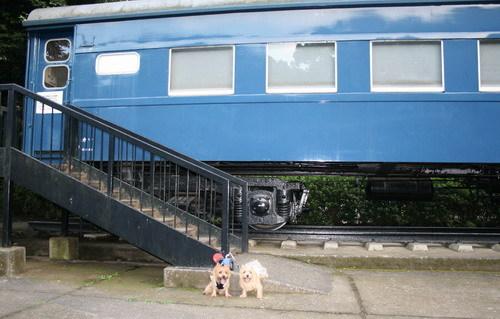 電車大きいね.jpg