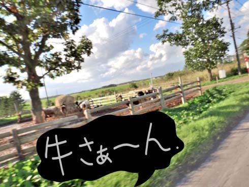 ここいらぢゃ~馬ぢゃ~なく、牛です。