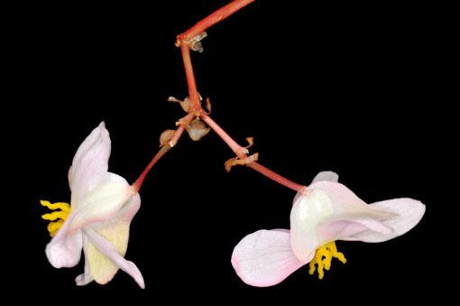 先端で雄花と雌花のそれぞれにゃ~分かれんよーです。