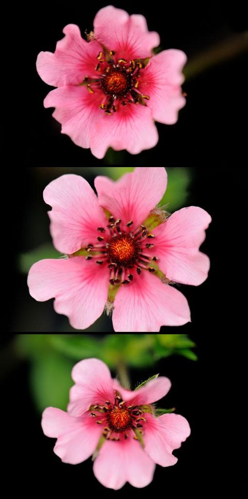放射状に入る花脈が良いアクセントになってます。