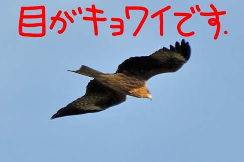 獲物を狙う目(?_?)