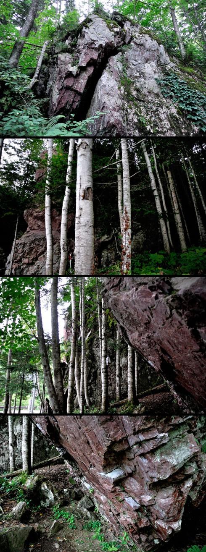 断っとくまでもなく、シラカバより岩の方が年代は遥かに遡ってます。