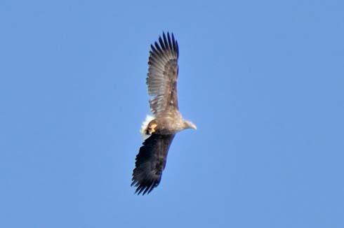 翼もデカイです。