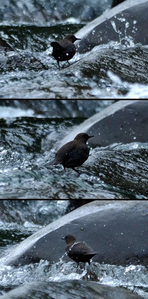 激しい水流にも足を取られません。