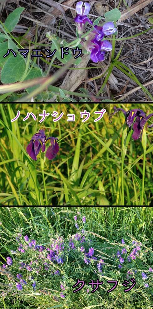 ブルー系の花々です。