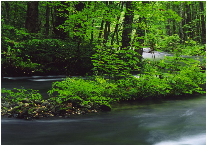 9 森に流れる.jpg