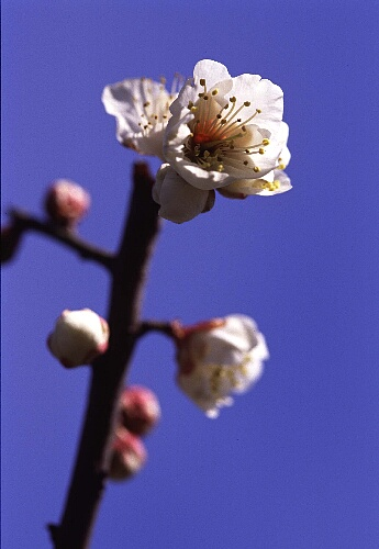白鳥庭園 -初春第一撮影②-.jpg