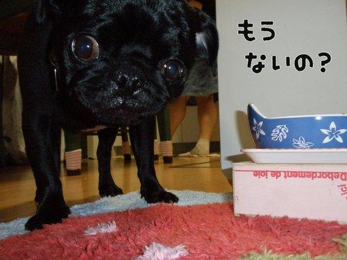 100505_o4.jpg