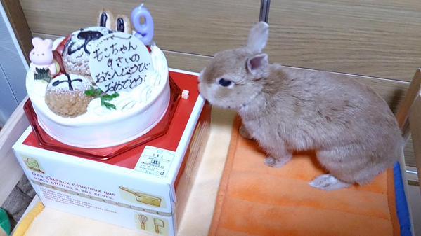 9歳の誕生日です!