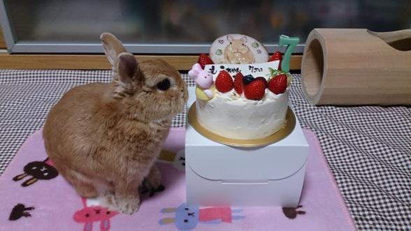 7歳の誕生日です!