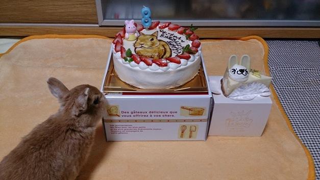 8歳の誕生日です!
