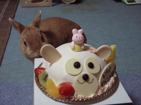 4歳の誕生日です!