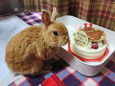 11歳の誕生日です!