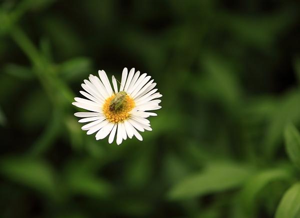1007花と虫.JPG
