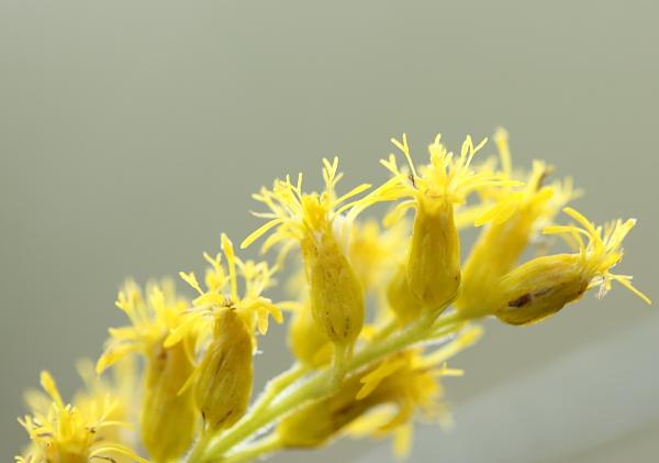 1018黄色の花.JPG
