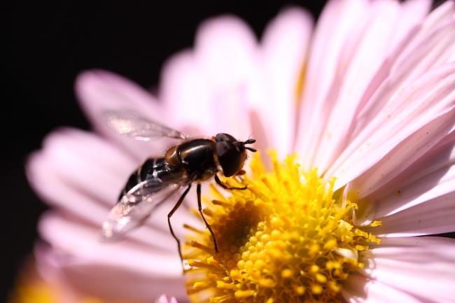 1102花と虫.JPG