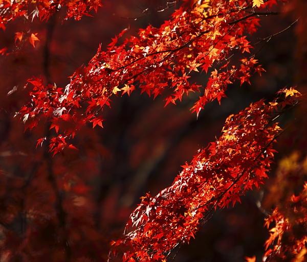1207高尾山紅葉3.JPG