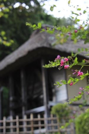 916日本民家園6.JPG