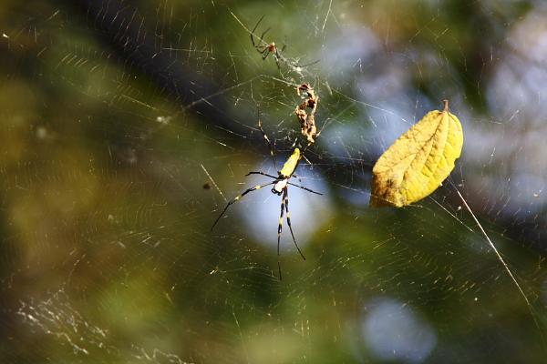 918_蜘蛛.JPG