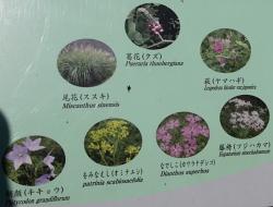 東御苑・二の丸庭園七草.JPG