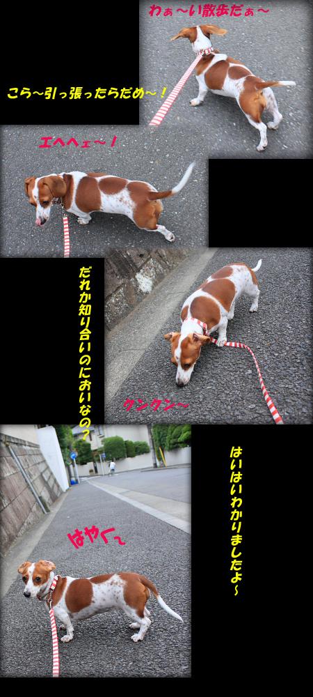 散歩だ散歩だ~わぁ~い!
