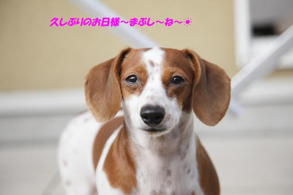 柚02011.JPG