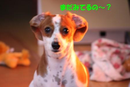 柚08.4.12 004b.jpg