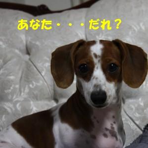 柚08.4.12 006b.jpg