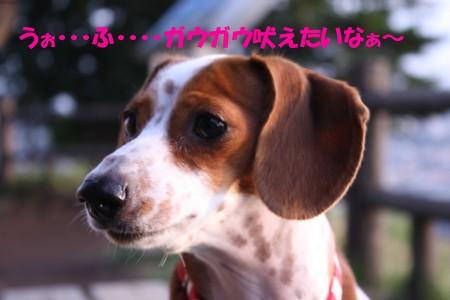 柚08.4.12 018b.jpg