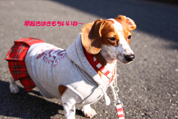 柚1002朝陽.JPG