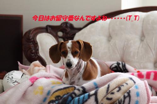 柚1008お留守番.JPG