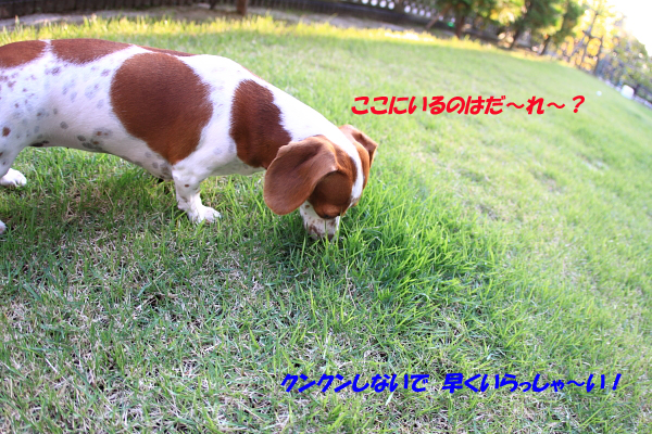 柚1009何かいるよ~.JPG