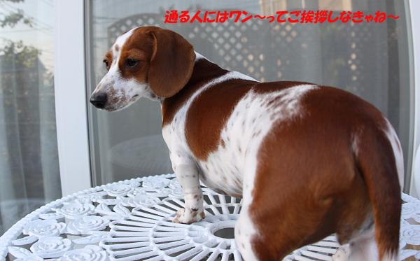 柚1009番犬.JPG