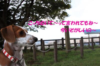 柚1015.JPG