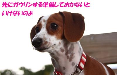柚10151.JPG