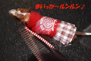 柚1025散歩.JPG