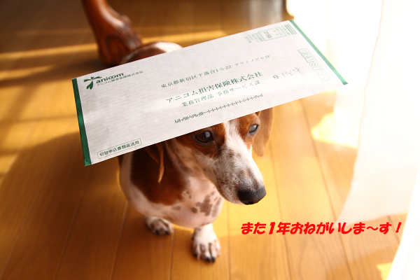 柚1028保険.JPG