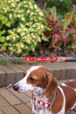 柚1028郵便.JPG