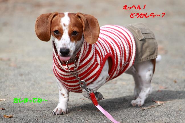 柚1107_8.JPG