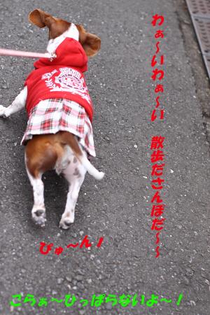 柚1111散歩1.JPG