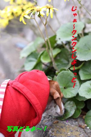 柚1111散歩3.JPG