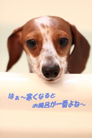 柚1111風呂.JPG