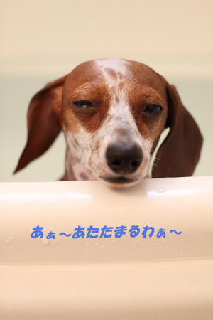 柚1111風呂1.JPG