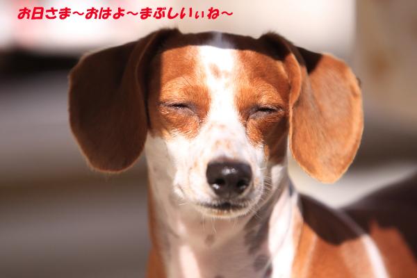 柚11151.JPG
