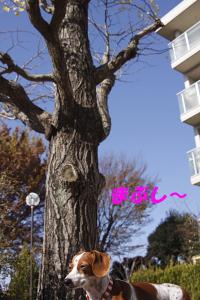 柚12016.JPG