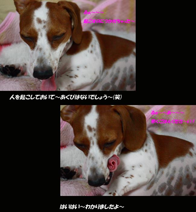 柚80500.jpg